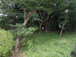 0yamakawa_006